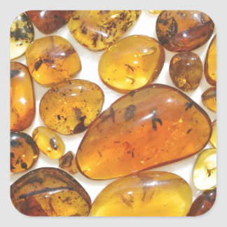 Fossil inclusions in Oligocene Dominican amber Square Sticker
