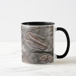 Fossil Trilobites: TRILOBITE FOSSILS Mug