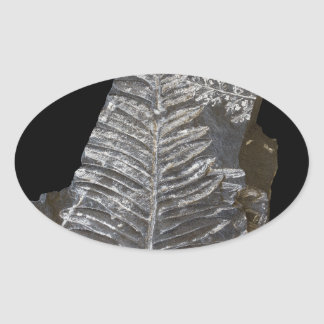 Fossilized Fern Leaves Photo on Black Oval Sticker