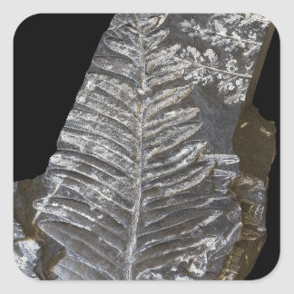 Fossilized Fern Leaves Photo on Black Square Sticker