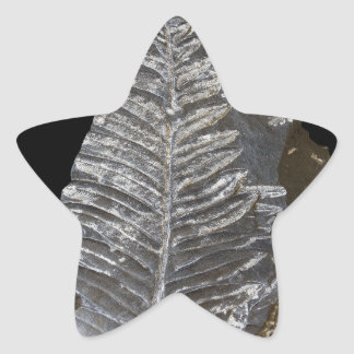 Fossilized Fern Leaves Photo on Black Stickers