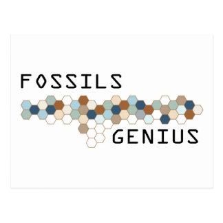 Fossils Genius Postcard