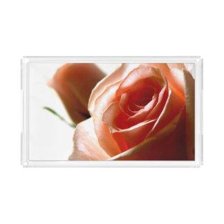 Fotografía de delicadas rosas
