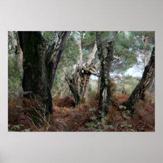 Fotografía paisaje de alcornoques en Doñana Posters