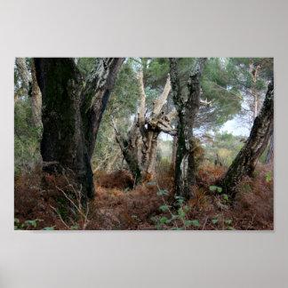 Fotografía paisaje de alcornoques en Doñana Poster