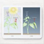 fotosynthese dag en nacht muis mat