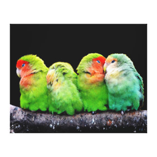 Four Adorable Parrots Together Wrap Canvas Print