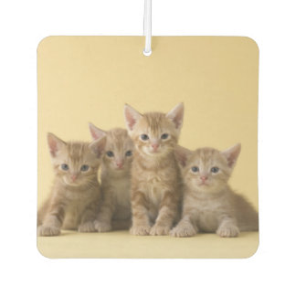 Four American Shorthair Kittens Car Air Freshener