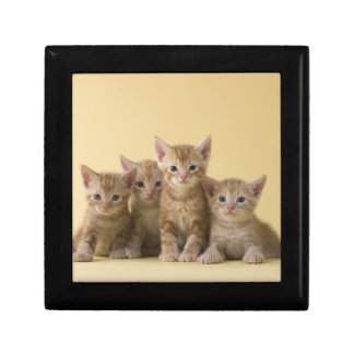 Four American Shorthair Kittens Gift Box