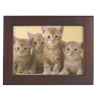 Four American Shorthair Kittens Keepsake Box