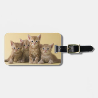 Four American Shorthair Kittens Luggage Tag