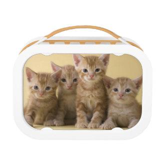 Four American Shorthair Kittens Lunch Box