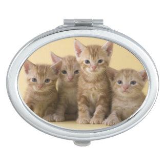 Four American Shorthair Kittens Vanity Mirror
