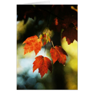 Four autumn leaves greeting card