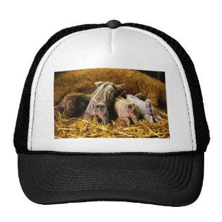 Four Baby Piglet Mangalitsa Hogs Showing Butts Cap