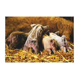 Four Baby Piglet Mangalitsa Hogs Showing Butts Gallery Wrap Canvas