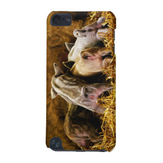 Four Baby Piglet Mangalitsa Hogs Showing Butts iPod Touch (5th Generation) Cases