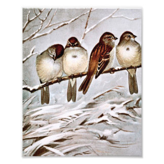 Four Cute Tree Sparrows Photographic Print