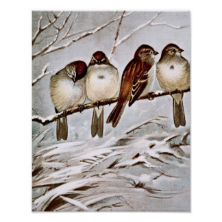 Four Cute Tree Sparrows Poster