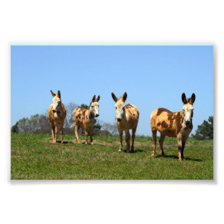 Four Donkeys Art Photo