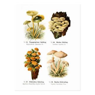 Four fungi postcard