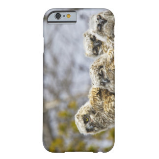 Four Great Horned Owl (Bubo Virginianus) Chicks Barely There iPhone 6 Case