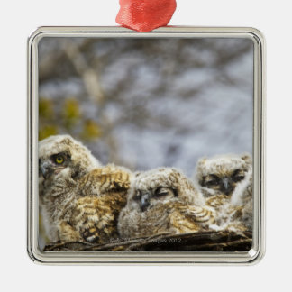 Four Great Horned Owl (Bubo Virginianus) Chicks Christmas Ornament