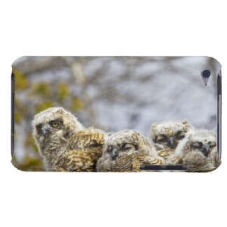 Four Great Horned Owl (Bubo Virginianus) Chicks iPod Touch Case