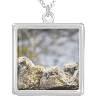 Four Great Horned Owl (Bubo Virginianus) Chicks Square Pendant Necklace