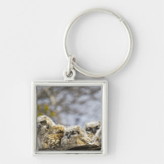 Four Great Horned Owl (Bubo Virginianus) Chicks Silver-Colored Square Key Ring