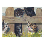 """""""Four Kittens Playing"""" Vintage Postcards"""