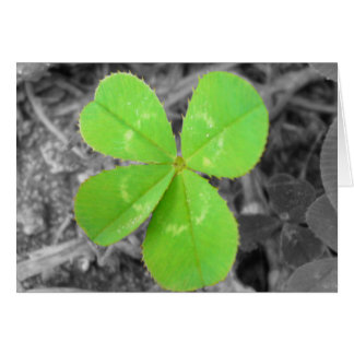 Four Leaf Clover Card - Black, White, and Color