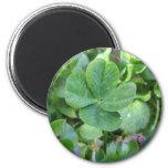 Four leaf clover refrigerator magnet