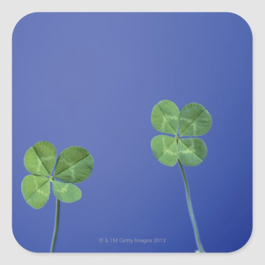 Four-leaf clovers square sticker