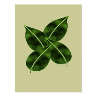 Four Leaves Posctcard Postcard