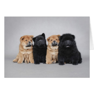 Four little Chow chow puppies Card