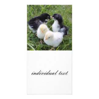 four lovely chicks photo cards