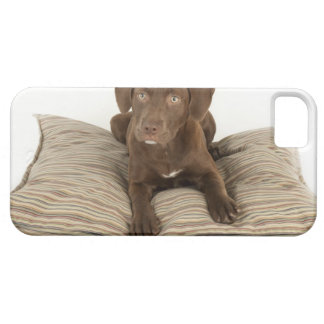 Four-Month-Old Chocolate Lab Puppy on Pillow Barely There iPhone 5 Case