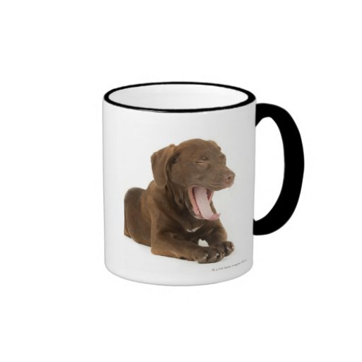 Four-Month-Old Chocolate Lab Puppy Yawning Coffee Mugs