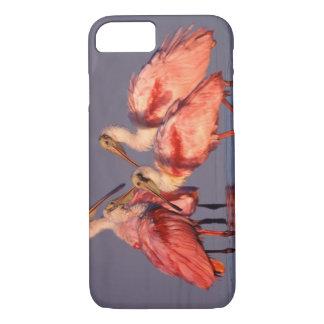 Four Roseate Spoonbills (Ajaia ajaja) at Dawn iPhone 8/7 Case
