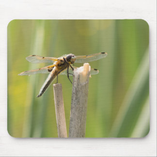 Four-spotted Chaser Dragonfly Mouse Mat