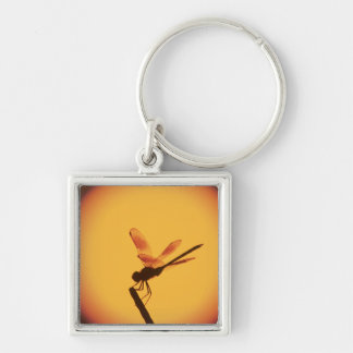 Four-spotted Pennant, Brachymesia gravida, Silver-Colored Square Key Ring