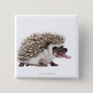 Four-toed Hedgehog - Atelerix albiventris 15 Cm Square Badge