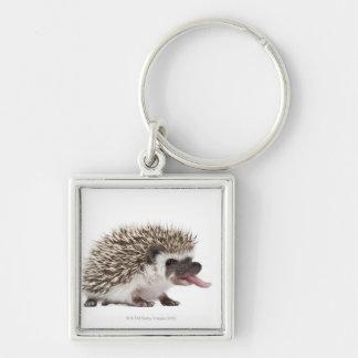 Four-toed Hedgehog - Atelerix albiventris Key Ring
