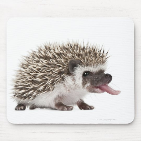 Four-toed Hedgehog - Atelerix albiventris Mouse Mat