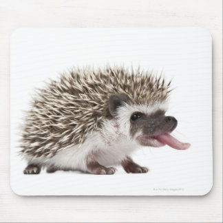 Four-toed Hedgehog - Atelerix albiventris Mouse Pad