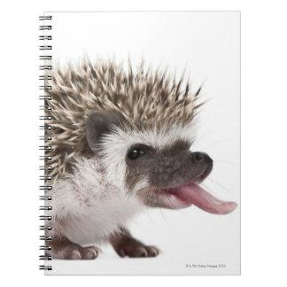 Four-toed Hedgehog - Atelerix albiventris Notebook