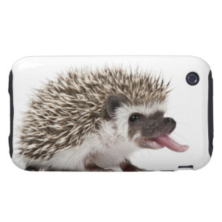 Four-toed Hedgehog - Atelerix albiventris Tough iPhone 3 Covers