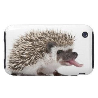 Four-toed Hedgehog - Atelerix albiventris Tough iPhone 3 Covers