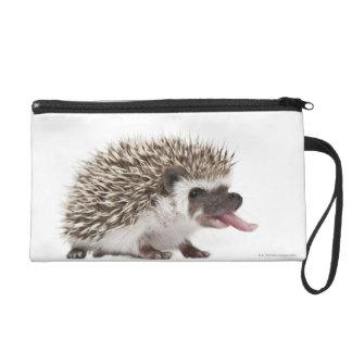 Four-toed Hedgehog - Atelerix albiventris Wristlet